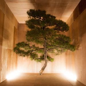 遠矢龍太郎|TOYARyutaro<br />まなざしを変えれば、世界は変わる -正しさの地平から、楽しさの気流へ-